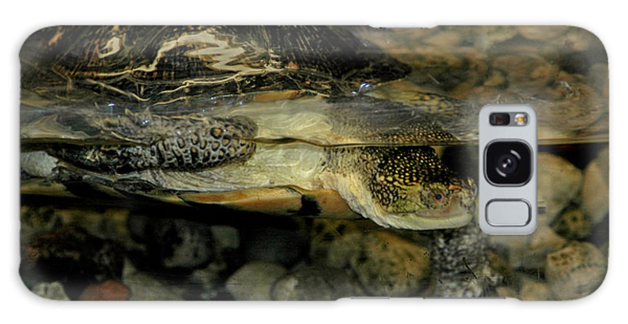 Usa Galaxy S8 Case featuring the photograph Blandings Turtle by LeeAnn McLaneGoetz McLaneGoetzStudioLLCcom