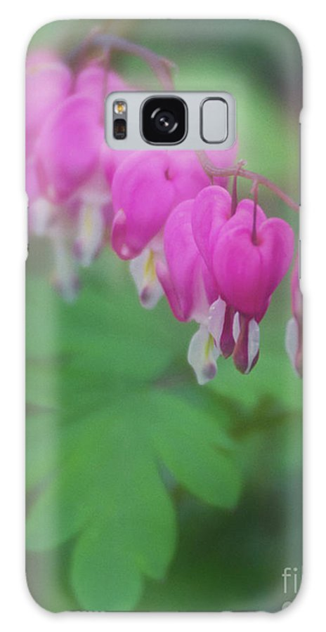 Bleeding Hearts Galaxy S8 Case featuring the photograph Bleeding Heart Mosaic by Carolyn Fox