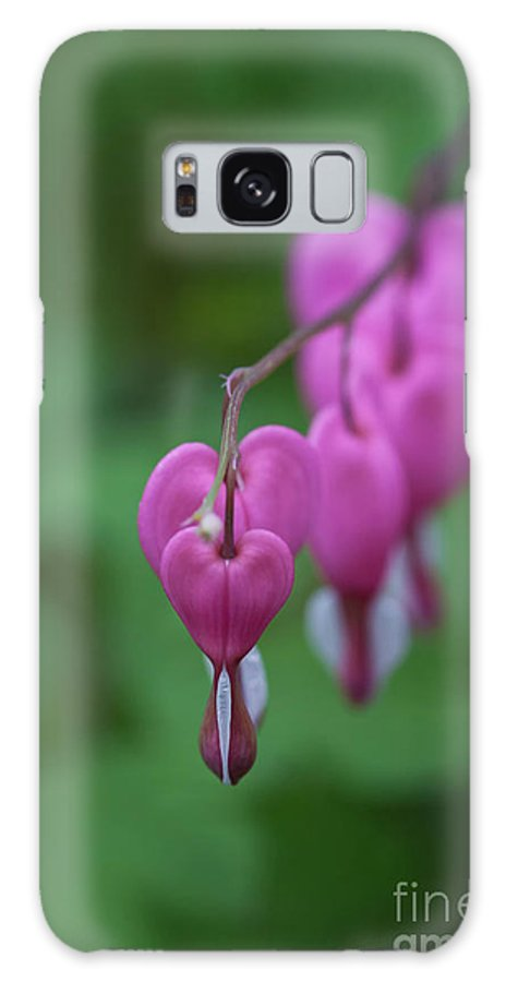 Bleeding Hearts Galaxy S8 Case featuring the photograph Bleeding Heart Parade by Carolyn Fox