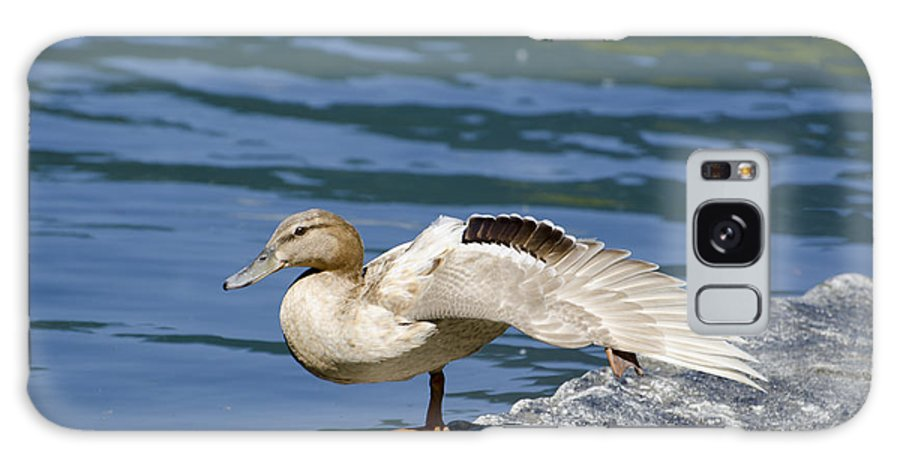 Duck Galaxy S8 Case featuring the photograph Blonde Duck by Mats Silvan
