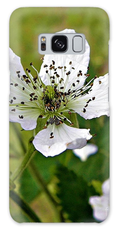 Flower Galaxy S8 Case featuring the photograph Blooming by Tisha Clinkenbeard