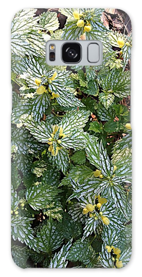Flowers Galaxy S8 Case featuring the photograph Blooms by Joseph Yarbrough