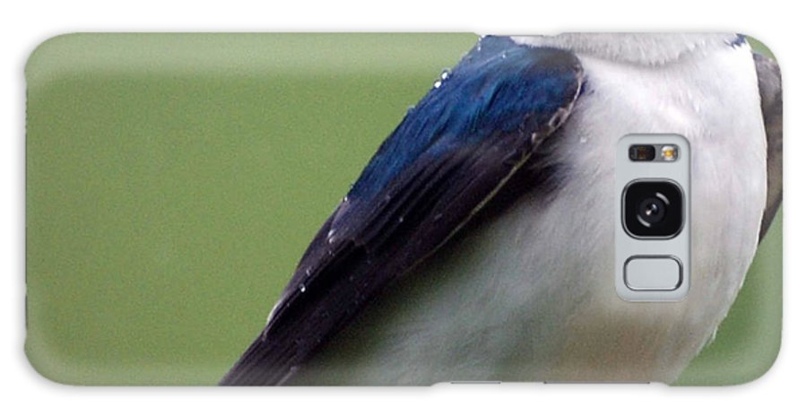 Bluebird Galaxy S8 Case featuring the photograph Blue Bird Of Happiness by Paul Ward