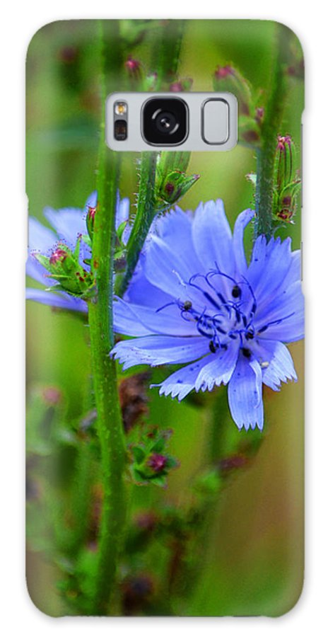 Wildflowers Of The Rocky Mountains Galaxy S8 Case featuring the photograph Blue Chicory Flower by Susanne Still
