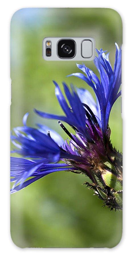 Cornflower Bud Galaxy S8 Case featuring the photograph Blue Cornflower by Steve Purnell