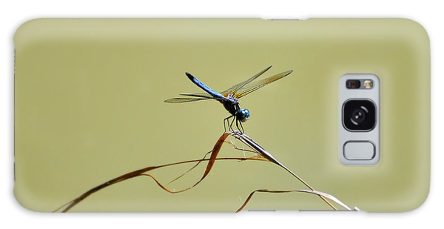 Dragonfly Galaxy S8 Case featuring the photograph Blue Dasher Dragonfly by Al Powell Photography USA
