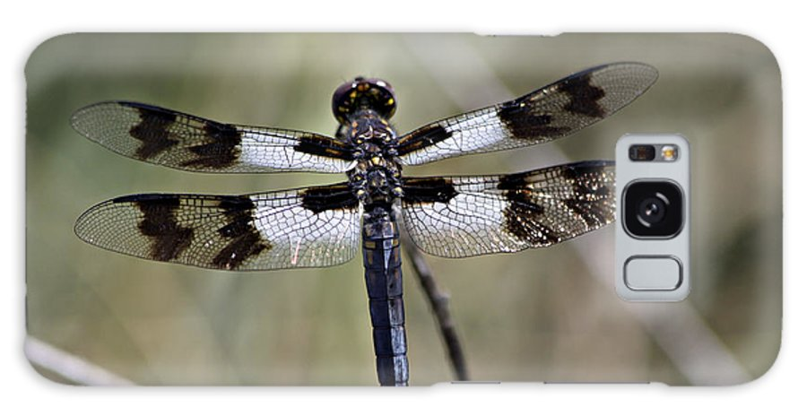 Dragonfly Galaxy S8 Case featuring the photograph Blue Dragon by Shawn Naranjo