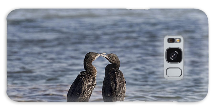 Cormorants Galaxy S8 Case featuring the photograph Blue Eyes Kissing by Douglas Barnard