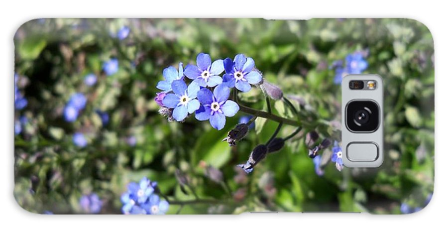 Flower Galaxy S8 Case featuring the photograph Blue Forget Me Not by Corinne Elizabeth Cowherd