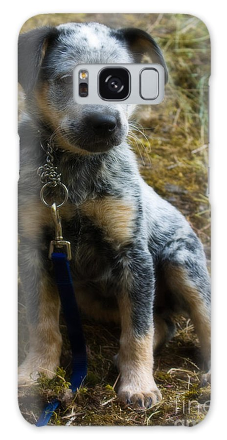 Blue Heeler Galaxy S8 Case featuring the photograph Blue Heeler Pup by Tyra OBryant