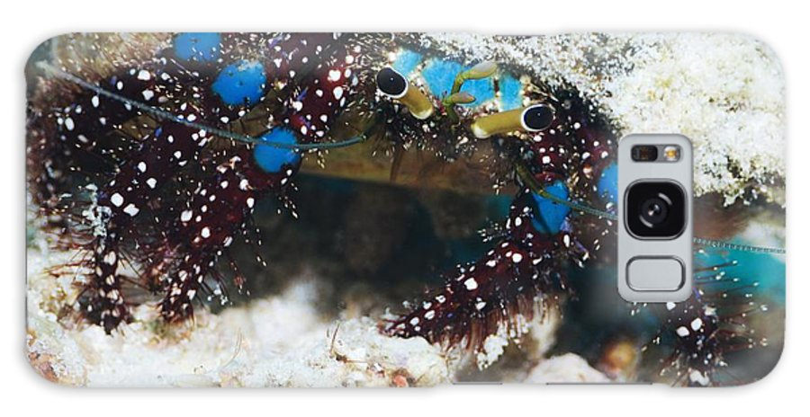 Blue-knee Hermit Crab Galaxy S8 Case featuring the photograph Blue-knee Hermit Crab by Georgette Douwma