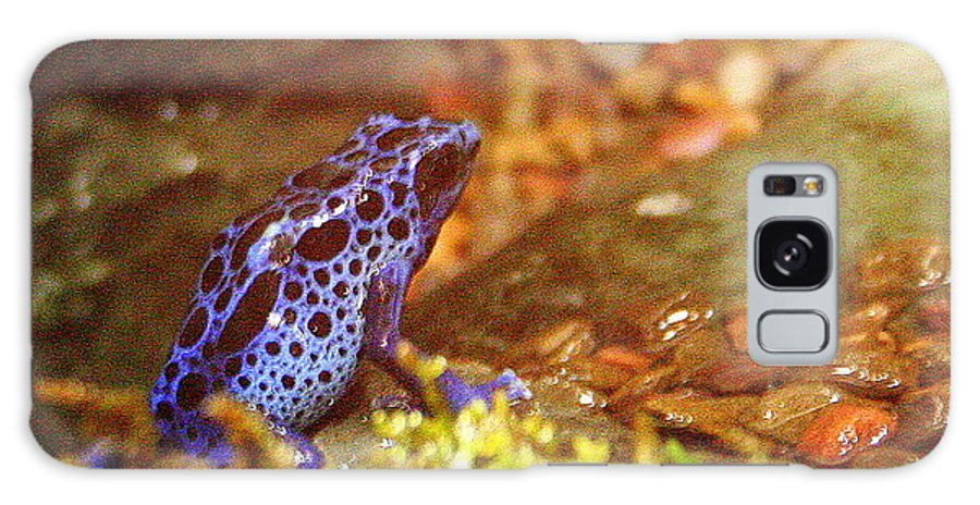 Blue Poison Dart Frog Galaxy S8 Case featuring the photograph Blue Poison Dart Frog by Laurel Talabere