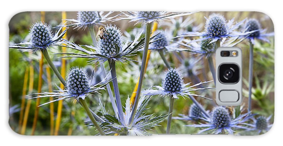 Blue Flowers Galaxy S8 Case featuring the photograph Blue Stem Sea Holly by Kelley King