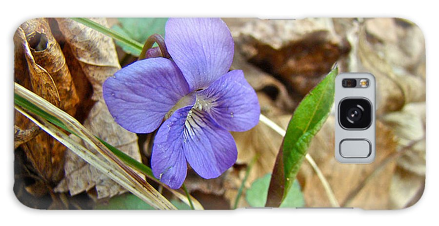 Wildflower Galaxy S8 Case featuring the photograph Blue Violet Wildflower - Viola Spp by Mother Nature