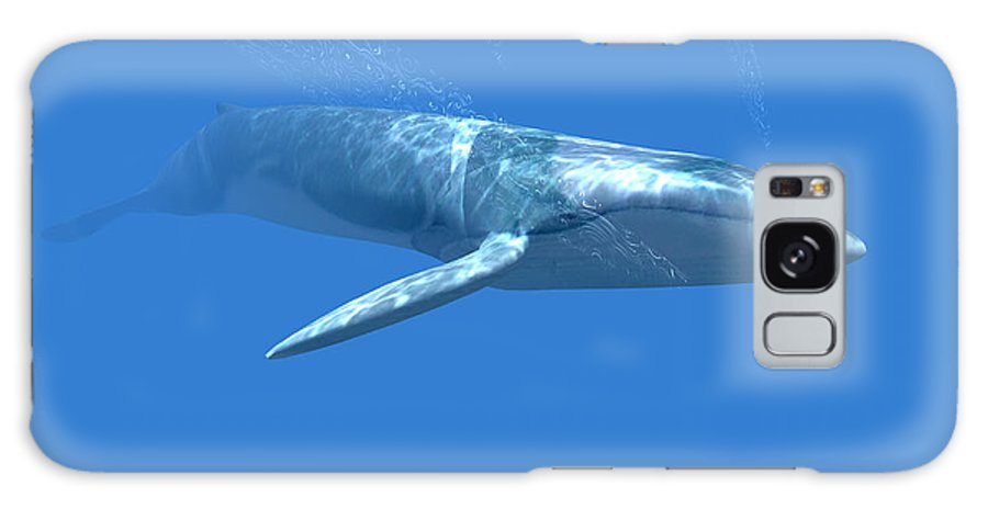Whale Galaxy S8 Case featuring the photograph Blue Whale by Christian Darkin