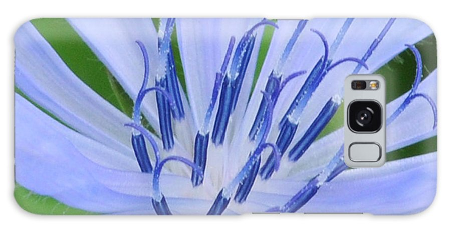 Blue Galaxy S8 Case featuring the photograph Blue Wildflower by Paul Ward