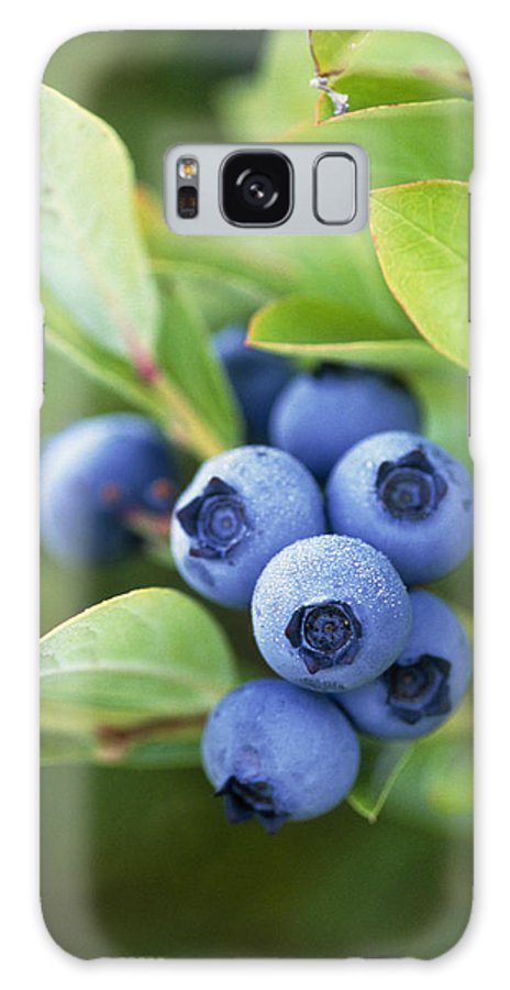 Blueberry Galaxy S8 Case featuring the photograph Blueberries Growing On A Shrub by Kaj R. Svensson