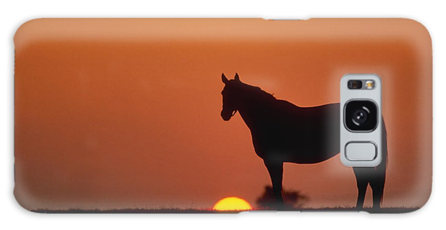 Thoroughbred Galaxy S8 Case featuring the photograph Bluegrass Sunset - Fs000285 by Daniel Dempster