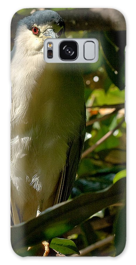 Birds Galaxy S8 Case featuring the photograph Blackcrowned Night Heron by Jean Noren