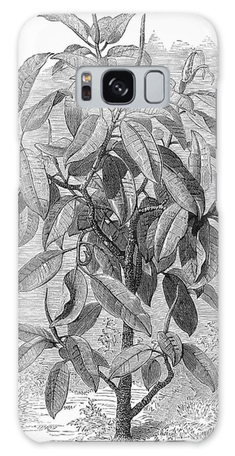 19th Century Galaxy S8 Case featuring the photograph Botany: Ficus Elastica by Granger