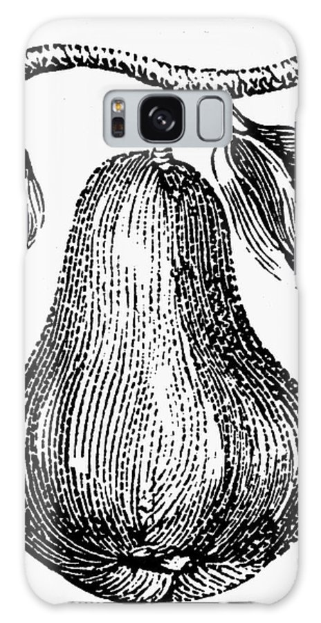 Biology Galaxy S8 Case featuring the photograph Botany: Pear by Granger
