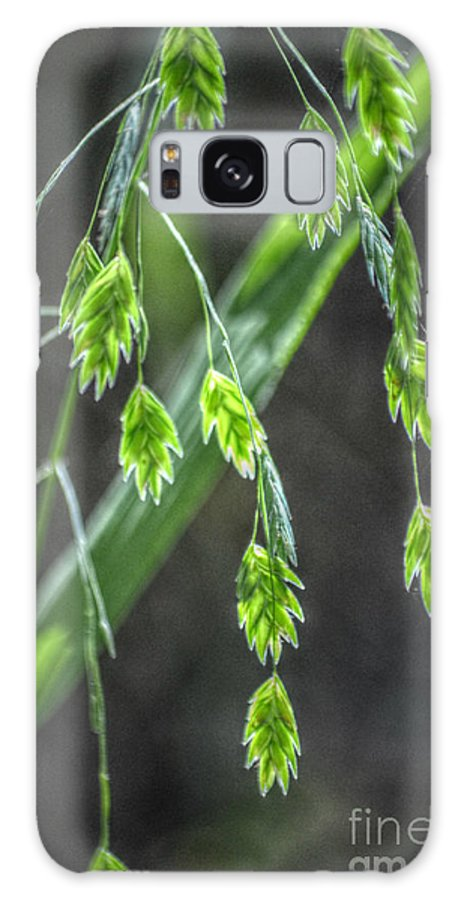Landscape Galaxy S8 Case featuring the photograph Bright Baby Leaves by Peggy Franz