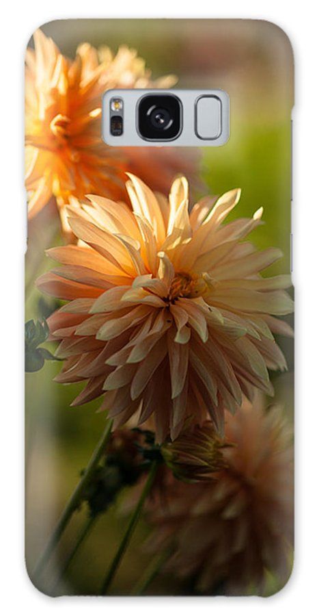 Flower Galaxy S8 Case featuring the photograph Brilliant Sunlight by Mike Reid