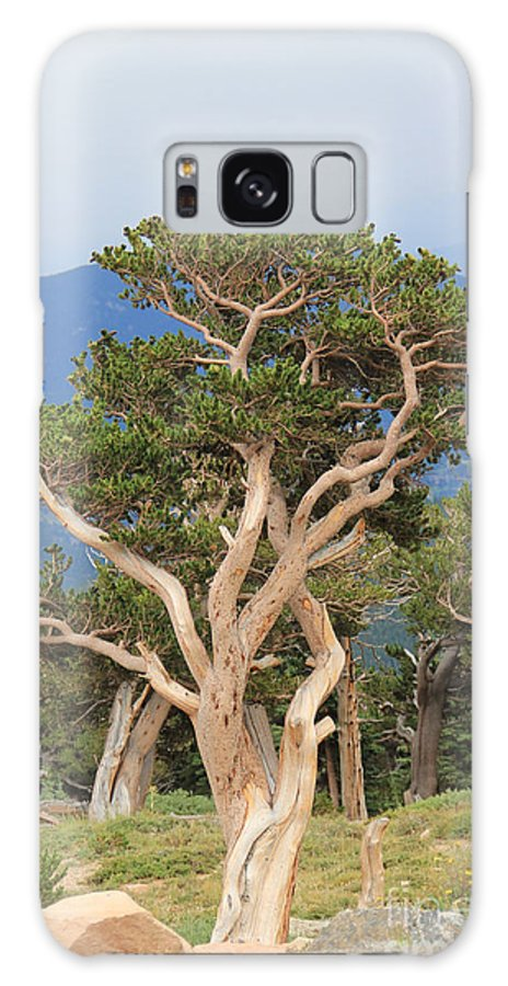 Nature Galaxy S8 Case featuring the photograph Bristlecone Pine by Brenda Deem