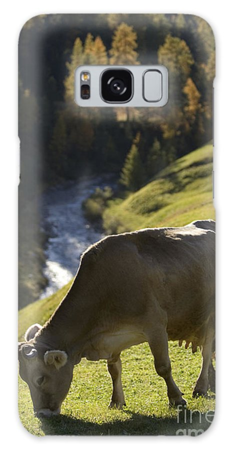 Alpine Galaxy S8 Case featuring the photograph Brown Cow Alps by Alex Rowbotham