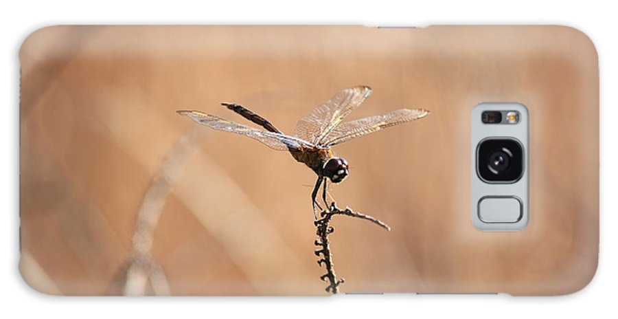 Dragonfly Galaxy S8 Case featuring the photograph Brown Dragonfly And Brown Reeds by Carol Groenen