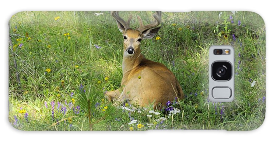 Deer Galaxy S8 Case featuring the photograph Buck What Are You Looking At by John Greaves