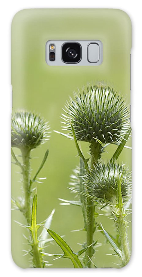 Cirsium Vulgare Galaxy S8 Case featuring the photograph Bull Or Spear Thistle Buds- Cirsium Vulgare by Kathy Clark