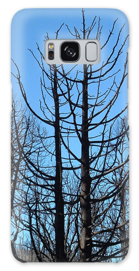 Nature Galaxy S8 Case featuring the photograph Burned Trees 2 by Naxart Studio