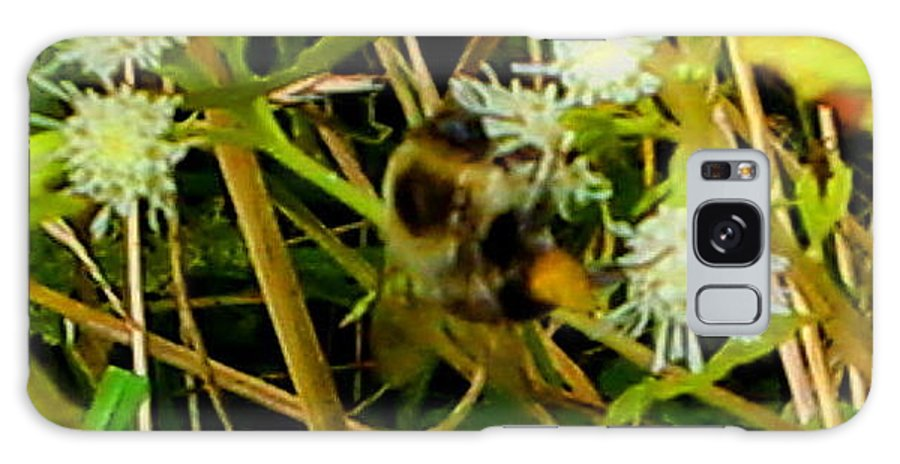 Bee Galaxy S8 Case featuring the photograph Busy Bee by April Patterson