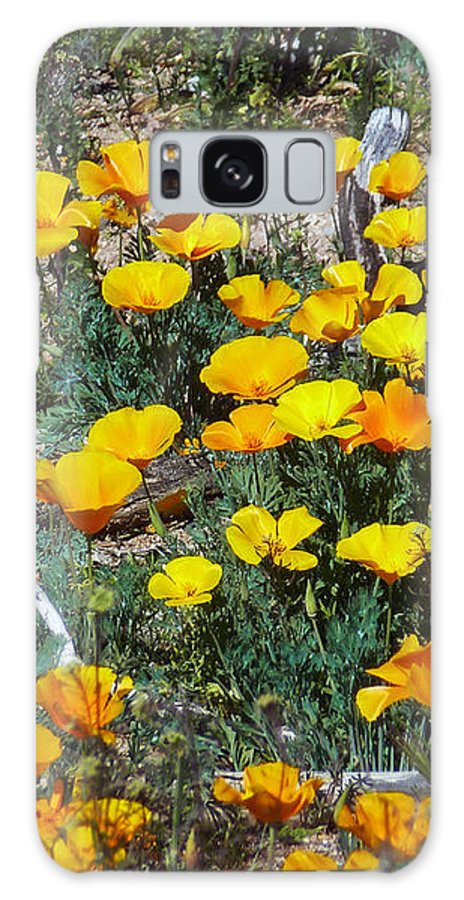 Buttercups In The Desert Galaxy S8 Case featuring the photograph Buttercups In The Desert by Methune Hively