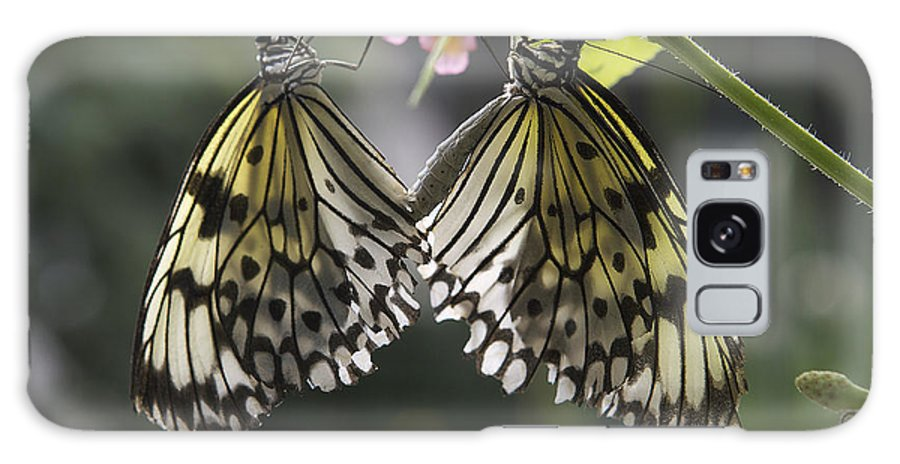 Butterflies Galaxy S8 Case featuring the photograph Butterfly Duo by Eunice Gibb