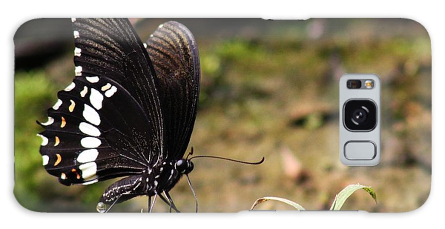 Butterfly Galaxy S8 Case featuring the photograph Butterfly Feeding by Ramabhadran Thirupattur