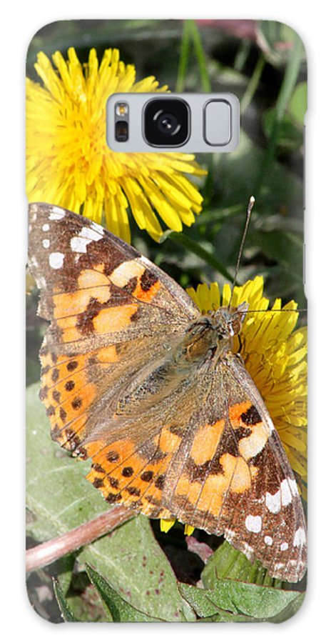 Galaxy S8 Case featuring the photograph Butterfly In The Sun by Mark J Seefeldt