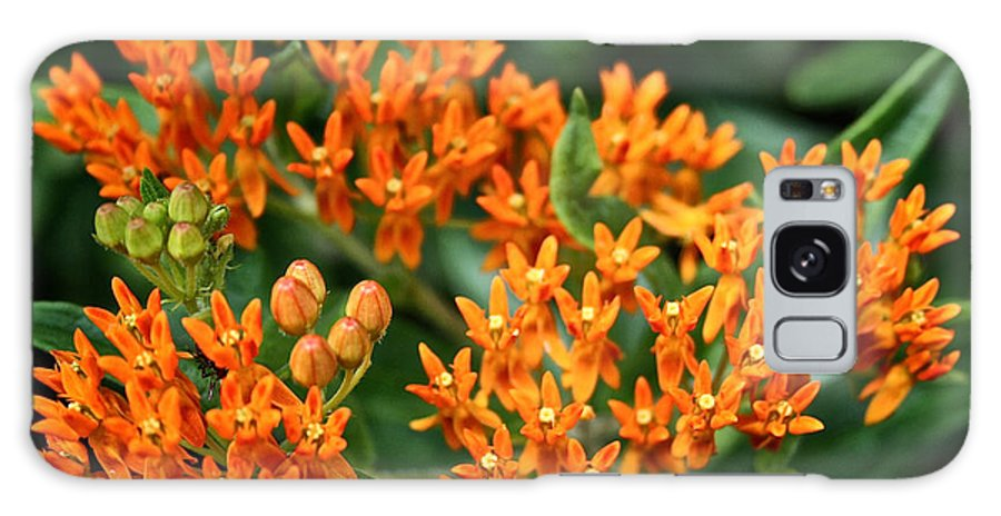 Garden Galaxy S8 Case featuring the photograph Butterfly Milkweed by Susan Herber