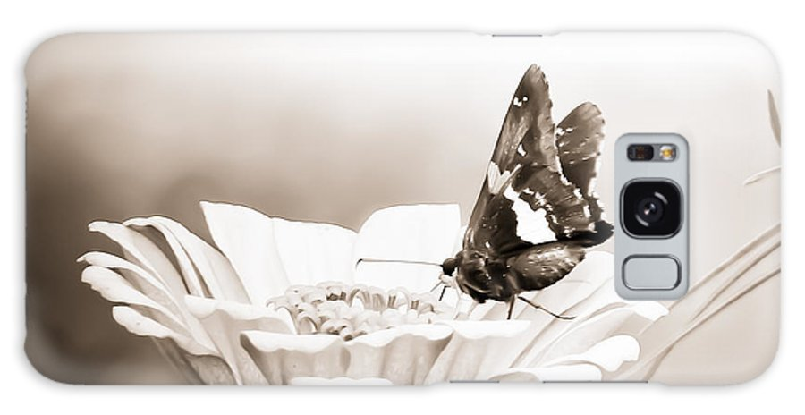 Photography Nature Butterfly Feeding Flower Black White Prints Posters Greeting Cards Galaxy S8 Case featuring the mixed media Butterfly On Flower Bw by Connie Dye