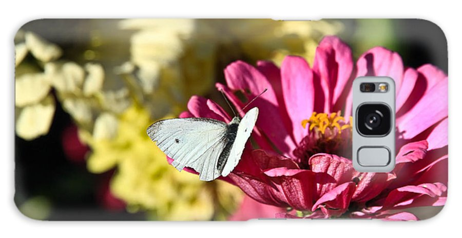 Flowers Galaxy S8 Case featuring the photograph Butterfly On Flower by Steve McKinzie