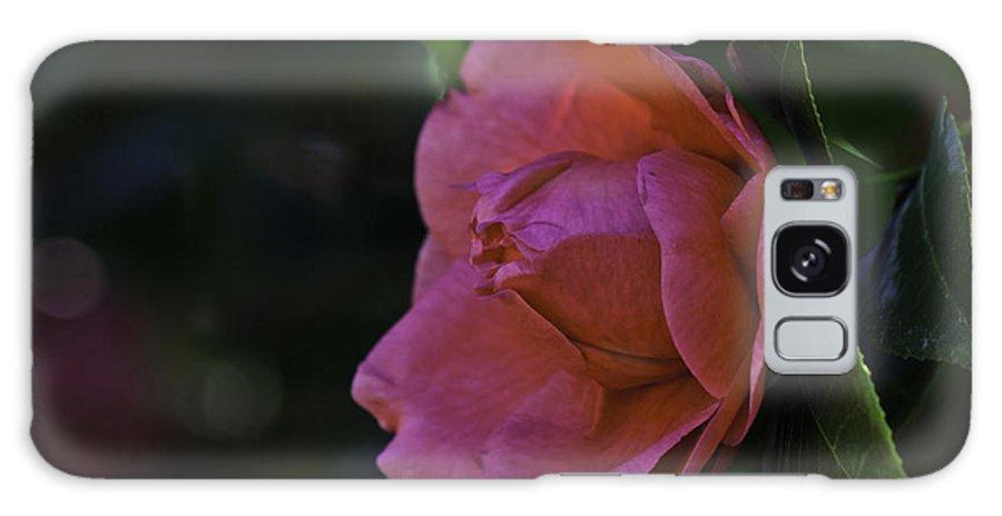 Camellia Galaxy S8 Case featuring the photograph Camellia Twenty-five by Ken Frischkorn