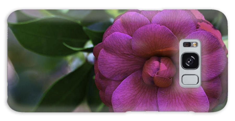 Camellia Galaxy S8 Case featuring the photograph Camellia Twenty by Ken Frischkorn