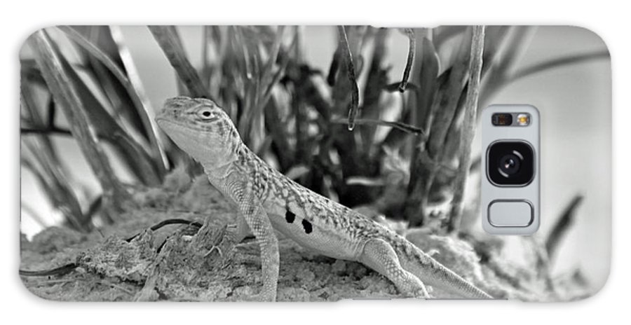 Lizzard Galaxy S8 Case featuring the photograph Can You See Me by Shawn Naranjo