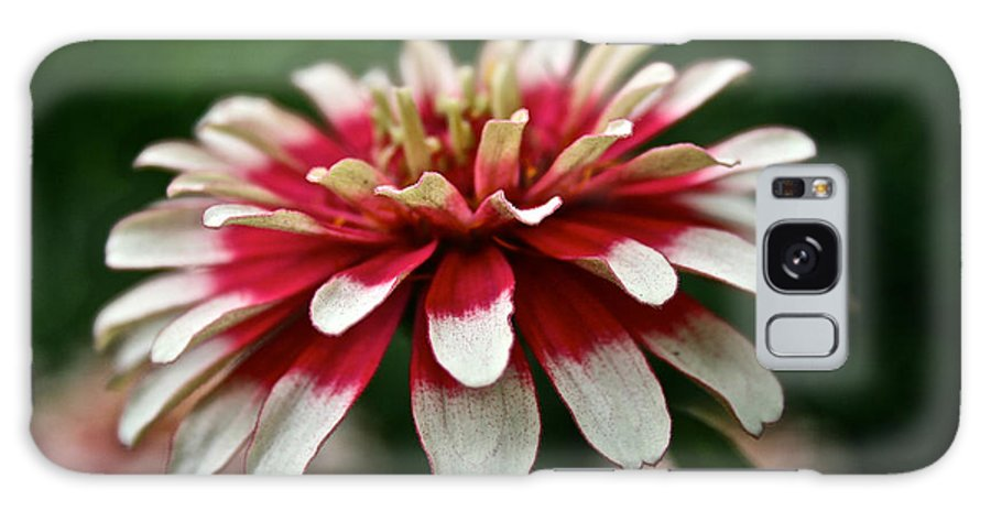 Garden Galaxy S8 Case featuring the photograph Candy Color Zinnia by Susan Herber