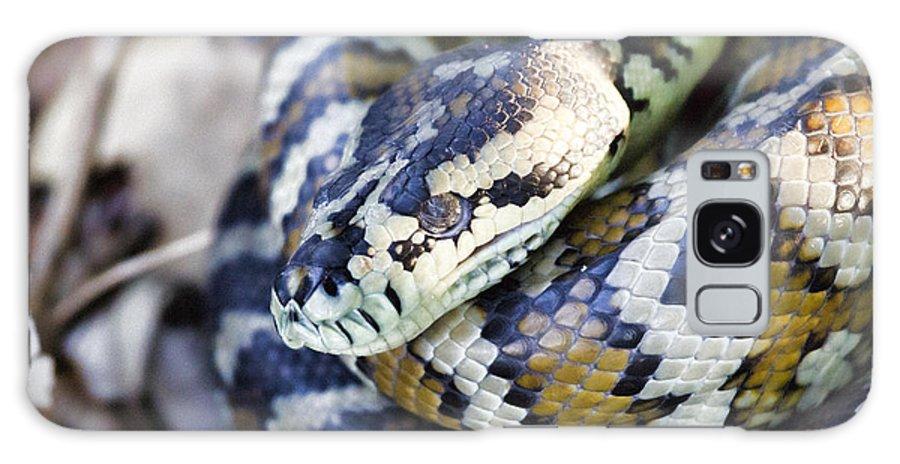 Carpet Python Galaxy S8 Case featuring the photograph Carpet Python by Douglas Barnard
