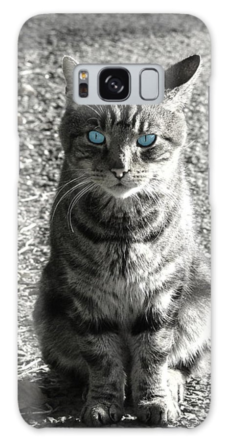 Cat Galaxy S8 Case featuring the photograph Cat With Blue Eyes by Tilen Hrovatic