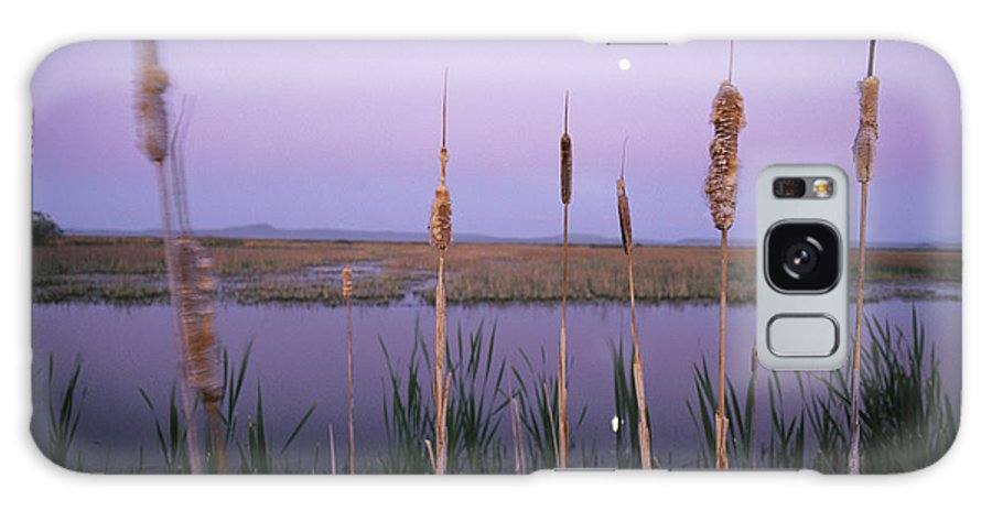 Klamath Basin Refuge Complex Galaxy S8 Case featuring the photograph Cattails, Klamath Basin National by Phil Schermeister