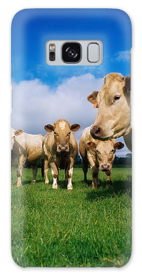Animals Galaxy S8 Case featuring the photograph Cattle, Charolais by The Irish Image Collection