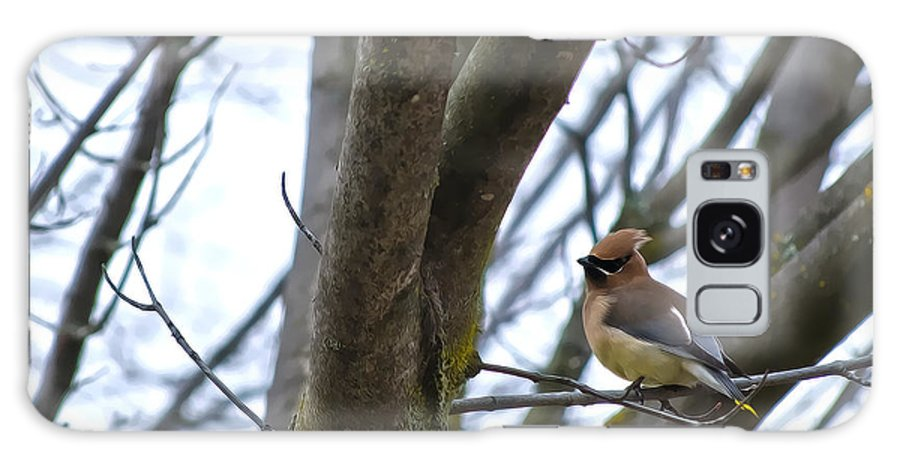 Cedar Waxwings Galaxy S8 Case featuring the photograph Cedar Waxwings by Diego Re